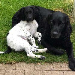 Benji & Bailey